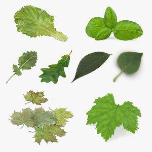 leaves 4 3D model