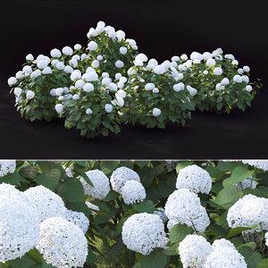 hydrangea bushes 3D model