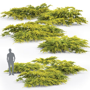 3D juniper bushes 2