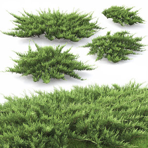 juniper bushes 2 juniperus 3D model