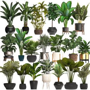 exotic plants pots interior 3D model