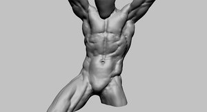 3D model dynamic torso