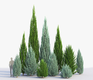 3D juniperus scopulorum