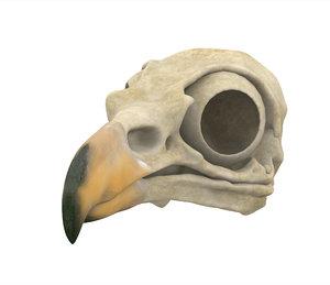 3D hippogriff skull model