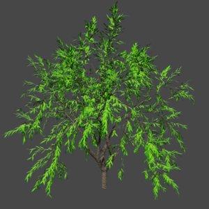 tree pbr 3D model