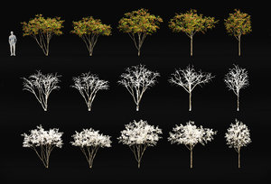 malus trees 3D model