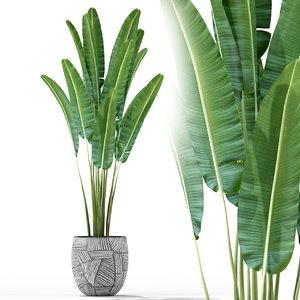 plants 225 3D model