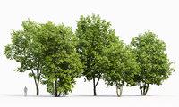 Maple-tree Pack #1