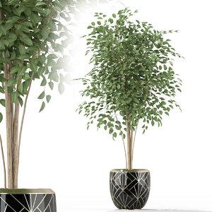plants 227 3D model