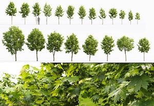 3D trees 2