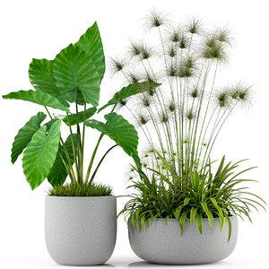 plants 239 3D model
