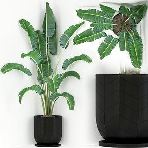 plants 243 3D