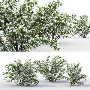 3D philadelphus bushes bouquet 1
