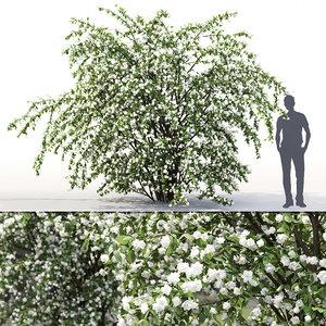 3D philadelphus bush bouquet