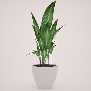 3D ficus plant tree model