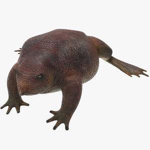 3D frog toad amphibian