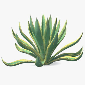 3D model agave americana century plant