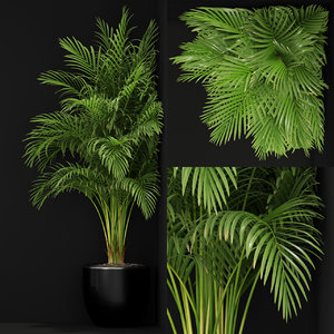 3D plants 259 model