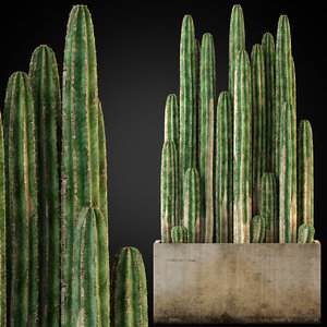 3D plants 260 model