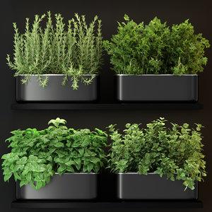 plants model