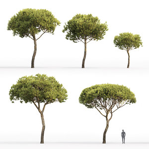 3D model trees 4
