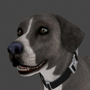 dog rigged 3D model