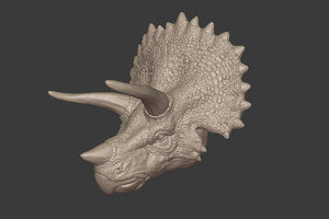 triceratops head 3D model
