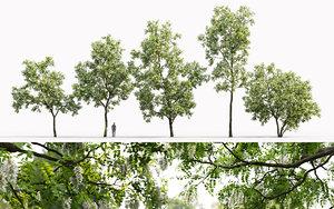 3D trees robinia pseudoacacia 1