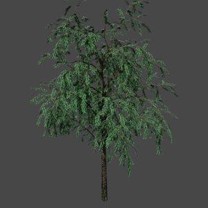 3D tree pbr