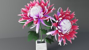 Chrysanthemum Flower 3D model