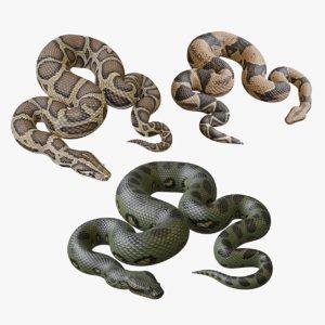 python reptiles boa 3D
