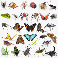 Insects Big Collection 4