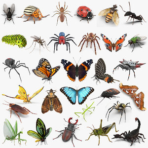 insects big 4 collections 3D model