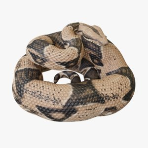 3D model rigged boa constrictor