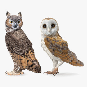 3D owls great horned model