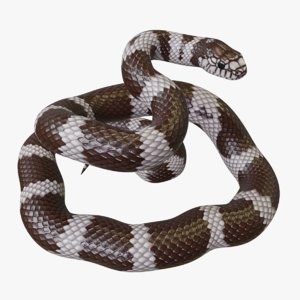 3D rigged california kingsnake reptile