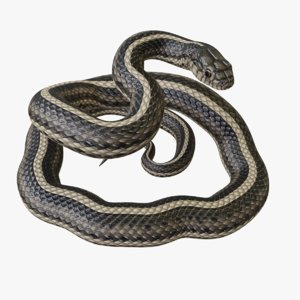 3D rigged garter snake reptile model