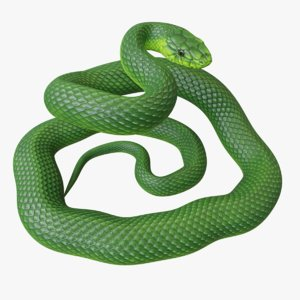 3D model rigged green mamba