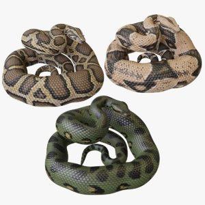 3D python reptiles model
