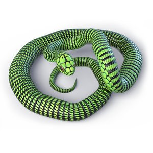 3D rigged boomslang reptile animation