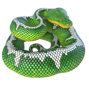 3D rigged emerald tree boa
