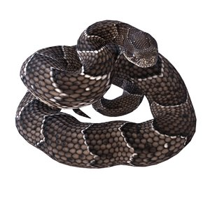 rigged puff adder reptile 3D