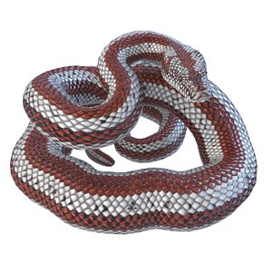 3D model rigged rosy boa reptile