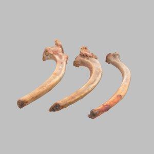 3D lamb bones model