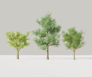 3D model trees realistic