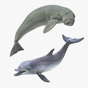 3D marine mammals rigged