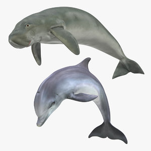 marine mammals 3D model