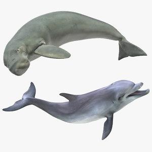 3D marine mammals rigged model
