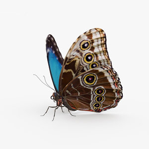 3D butterfly morpho