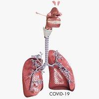 respiratory alveoli coronavirus organized 3D